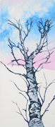 delight tree fine art print