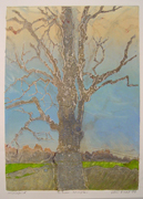 silver maple tree art print