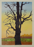 sun rise maple tree art print